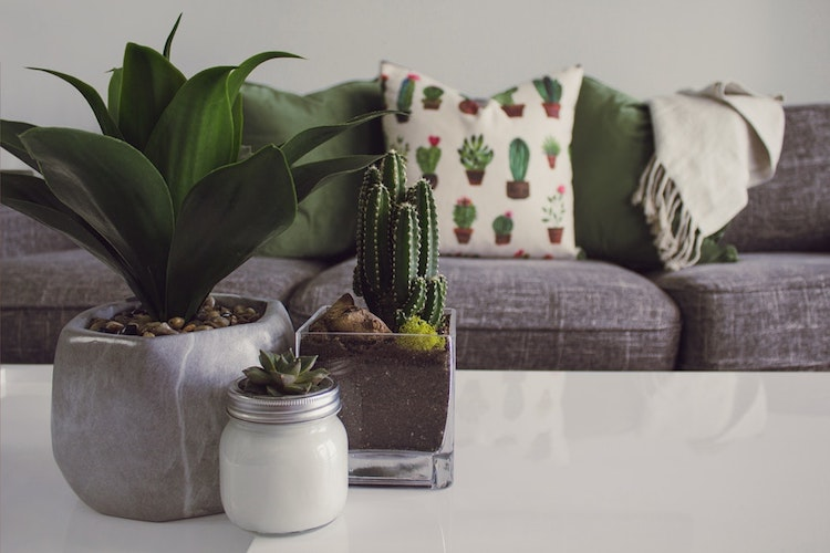 Plants on a coffee table.